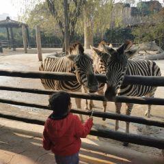 Shanghai Wild Animal Park User Photo