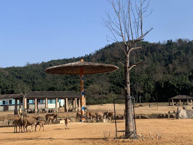항저우 야생동물원(항주 야생동물세계)