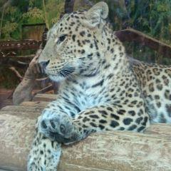 Chimelong Safari Park User Photo