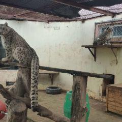 Qinghai-Tibet Plateau Wild Zoo User Photo