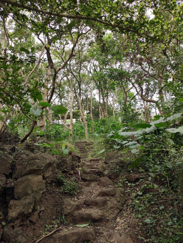火山森林公園