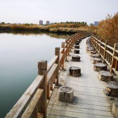 장예 국가 습지공원 여행 사진