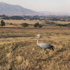 Hlane Royal National Park User Photo