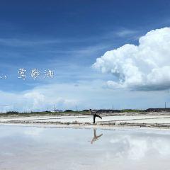 鶯歌海鹽場用戶圖片