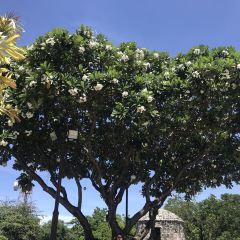 Fort San Pedro User Photo