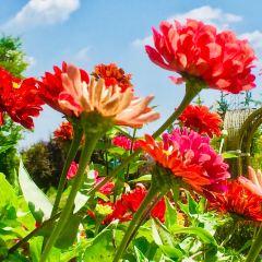 Tongji Flower Sea User Photo
