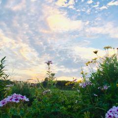 퉁지 꽃밭 여행 사진