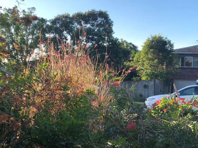 Hilo Tropical Gardens