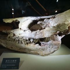 Geological Museum of Anhui User Photo