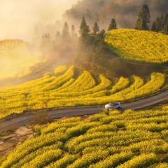 Menyuan Rapeseed Flower Field User Photo