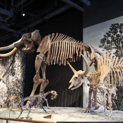 Natural History Museum of Utah User Photo