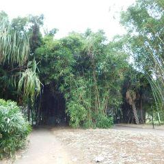 城市植物園用戶圖片