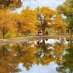 Jinta Huyang Forest User Photo