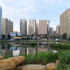 花果園濕地公園用戶圖片