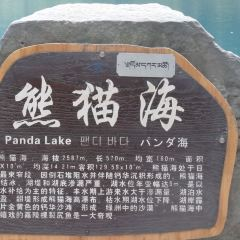 Panda Sea User Photo