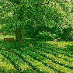 茶村用戶圖片