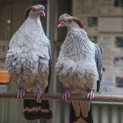 阿德萊德動物園用戶圖片