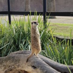 Adelaide Zoo User Photo