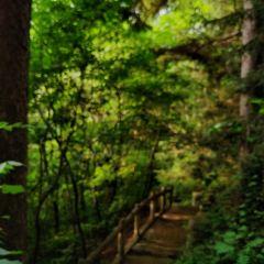 화목 삼림공원 여행 사진