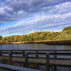 Lorne Beach User Photo