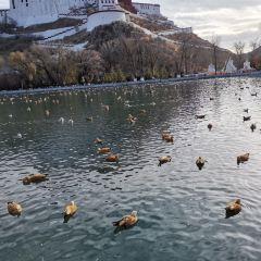 布達拉宮藥王山觀景台用戶圖片