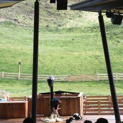 Walter Peak Farm User Photo