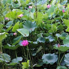 중산 공원 여행 사진