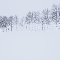 美瑛町のユーザー投稿写真