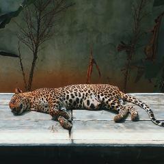 蘇梅水族館和老虎園張用戶圖片