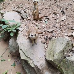 Hangzhou Zoo User Photo