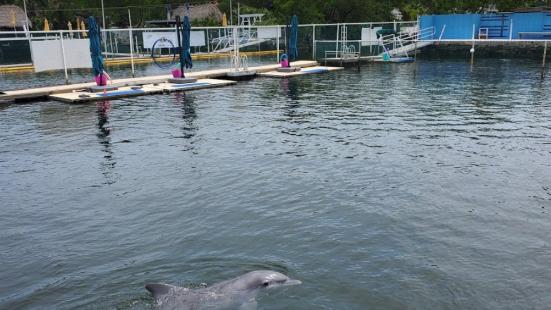 Dolphins Plus - Key Largo