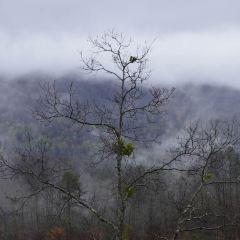 大煙山國家公園用戶圖片