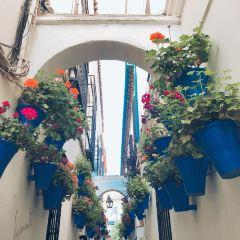 Calleja de las Flores User Photo