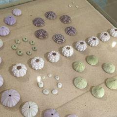 Phuket Seashell Museum User Photo