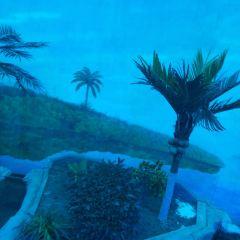 中泰海洋世界用戶圖片