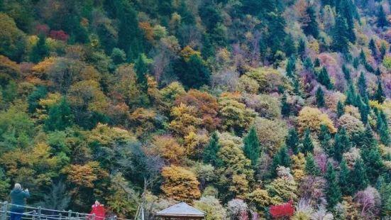 米亚罗风景区秋景很美很漂亮,彩林美极了,人间仙境一般,就像进