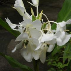 Tropical Gardens of Maui User Photo