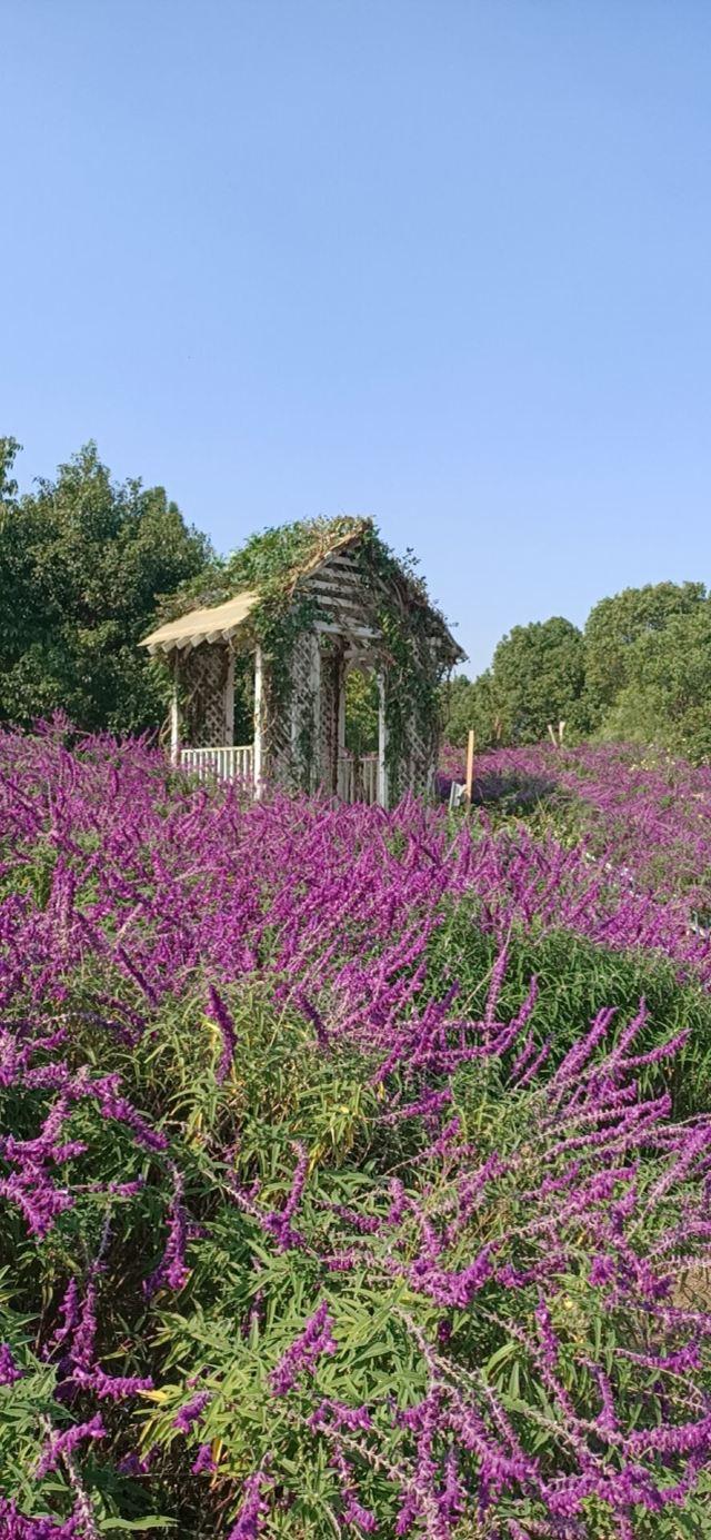 윈란만 꽃밭경관 공원