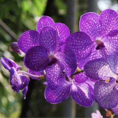 Phuket Orchid Farm User Photo