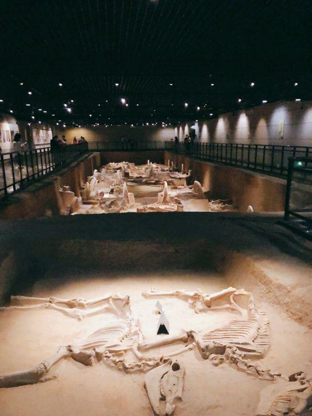 천자가육 박물관
