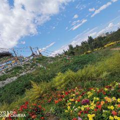 賽罕塔拉城中草原用戶圖片