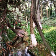 半山國家森林公園用戶圖片