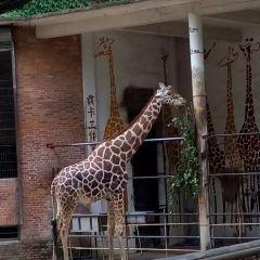 Guangzhou Zoo User Photo