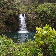 Puaa Kaa State Wayside User Photo
