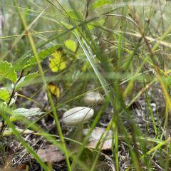海拉爾國家森林公園用戶圖片