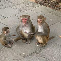 Nanwan Monkey Island User Photo