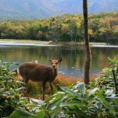 Shiretoko Peninsula User Photo