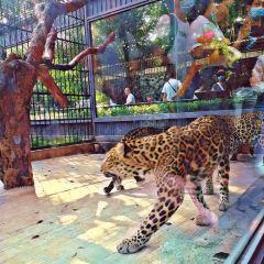 Shenzhen Safari Park User Photo