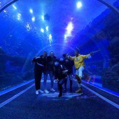 Cube Oceanarium User Photo