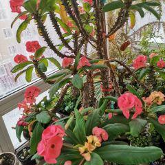 Dutch Flower Town User Photo
